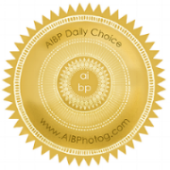 AIBP Daily Choice.jpg