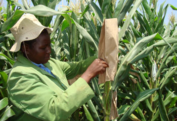 Climate Resilience Innovation:   Water Efficient Maize for Africa, a collaboration of the Gates Foundation, Monsanto and USAID