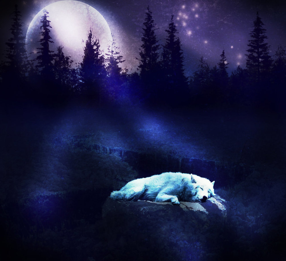 wolf-moon-wallpaper-11289-hd-wallpapers