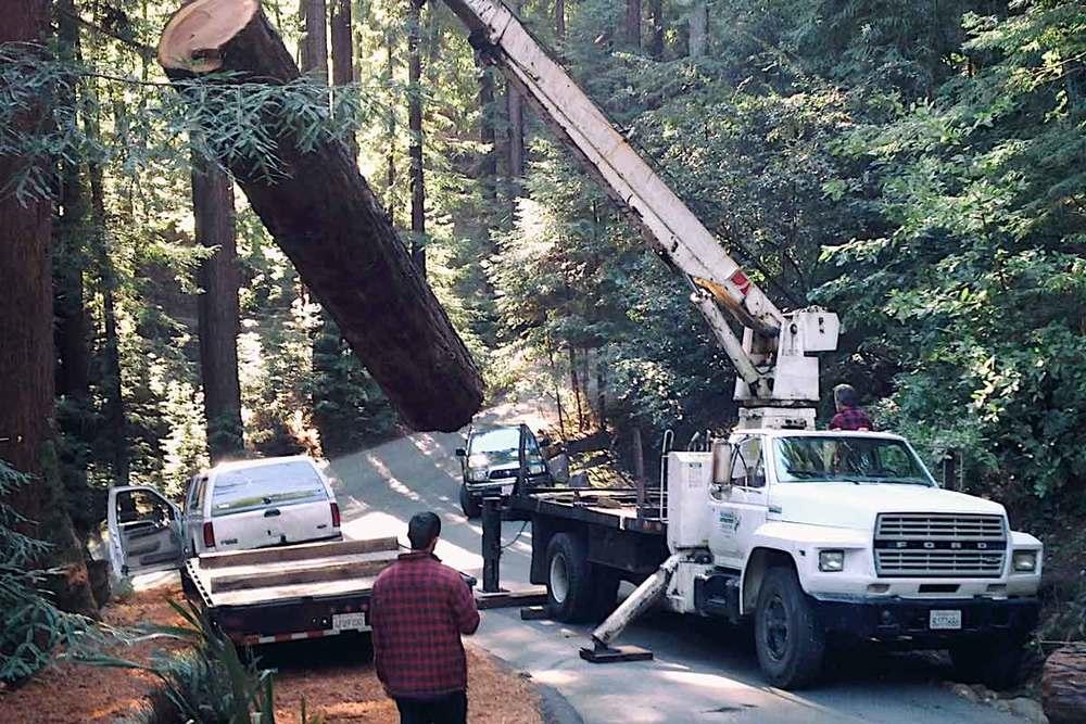 redwoodtree.jpg