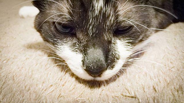 #sleepyhead #cat #home #safe #photographoftheday #photography #eyes #cozy #comfortable #feelgood #family