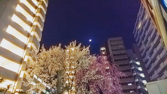 #cherryblossom #white #pink #moon #beautifulnight #fromhere #view #lights #litup #afterwork #photographoftheday #photography #happy #goodfeeling #smile #refreshing