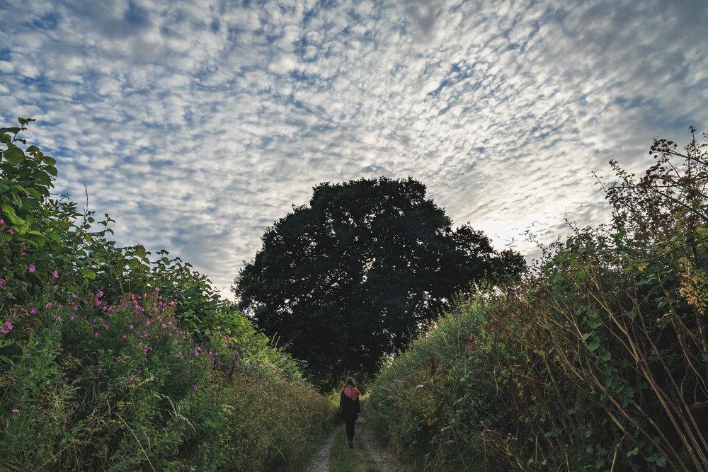 Glastonbury Millfield-73.jpg