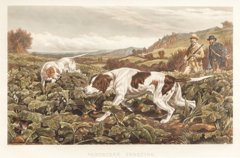 partridge shooting bradley basil.jpg