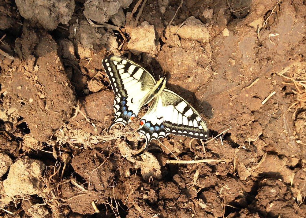 insectes Bio&co.jpg