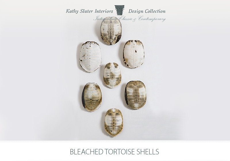 Bleached-Tortoise-Shells.jpg