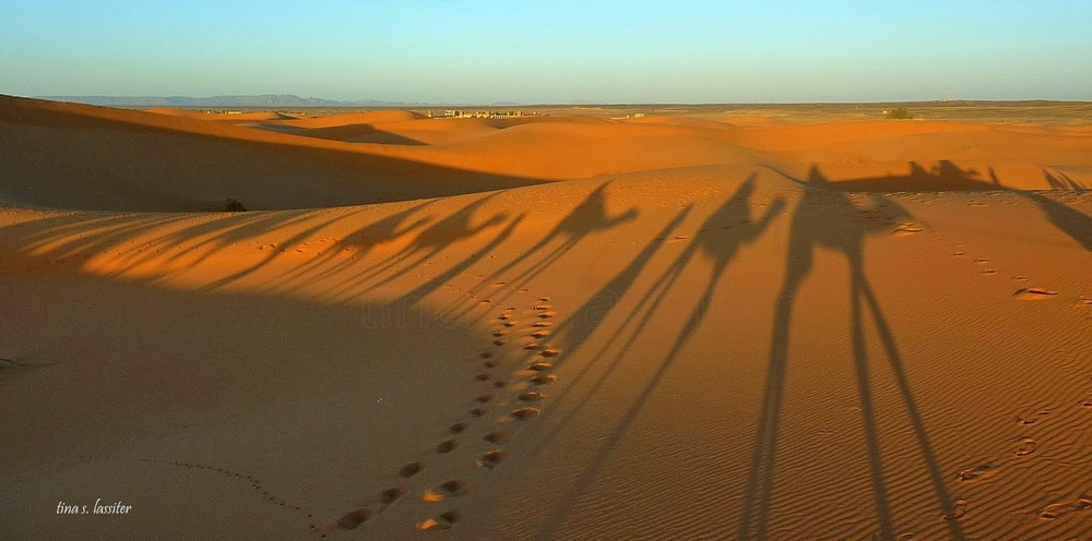 camel ride shadows