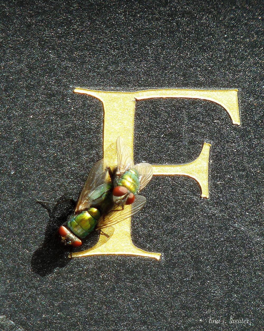 fly mates