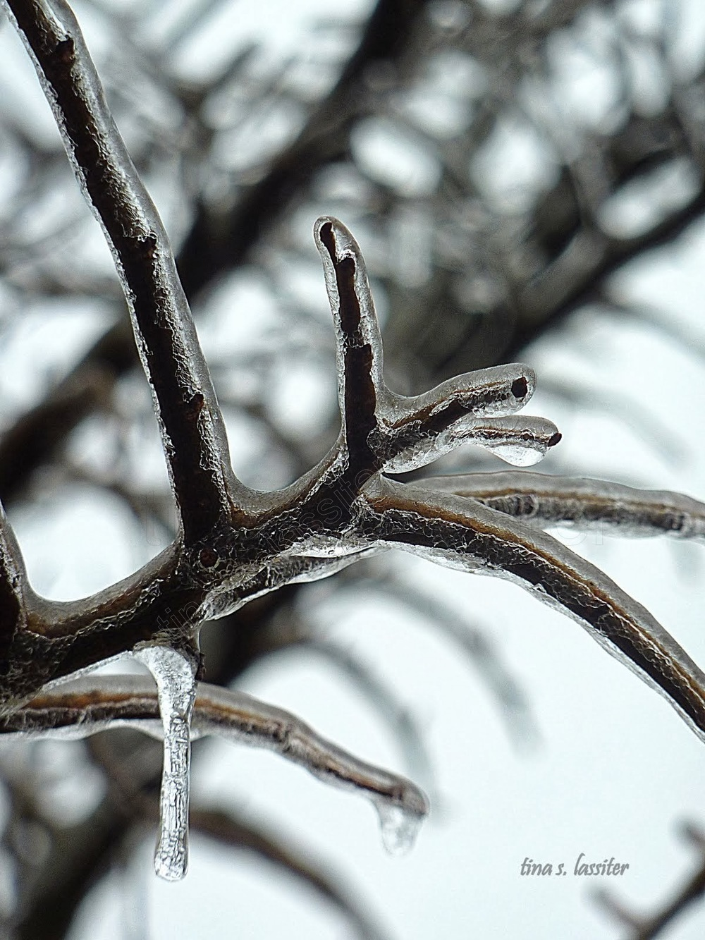 icicle branches