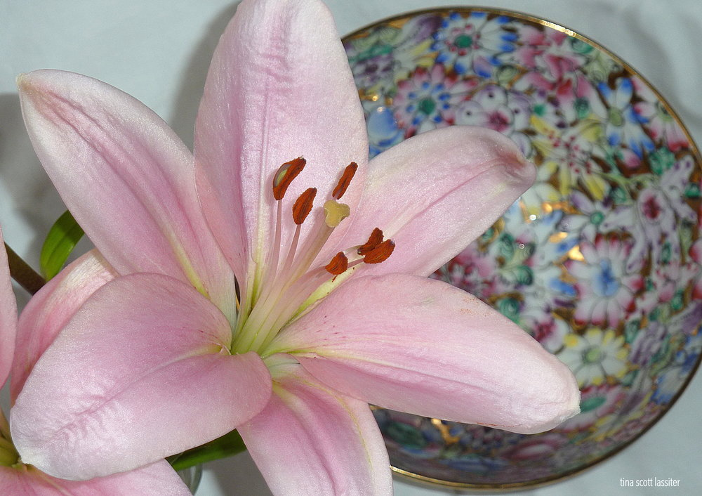 pink lily and antique bowl 2018.JPG