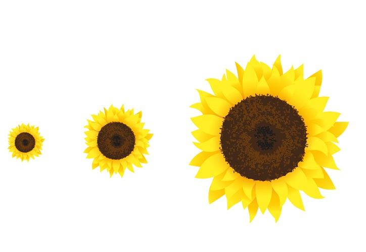 OhhhKaye Illustration-Sunflowers.jpg.jpg