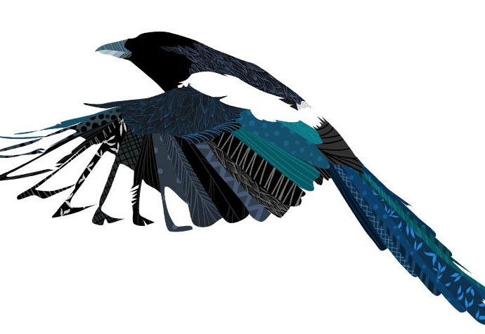OhhhKaye Illustration-magpie.jpg