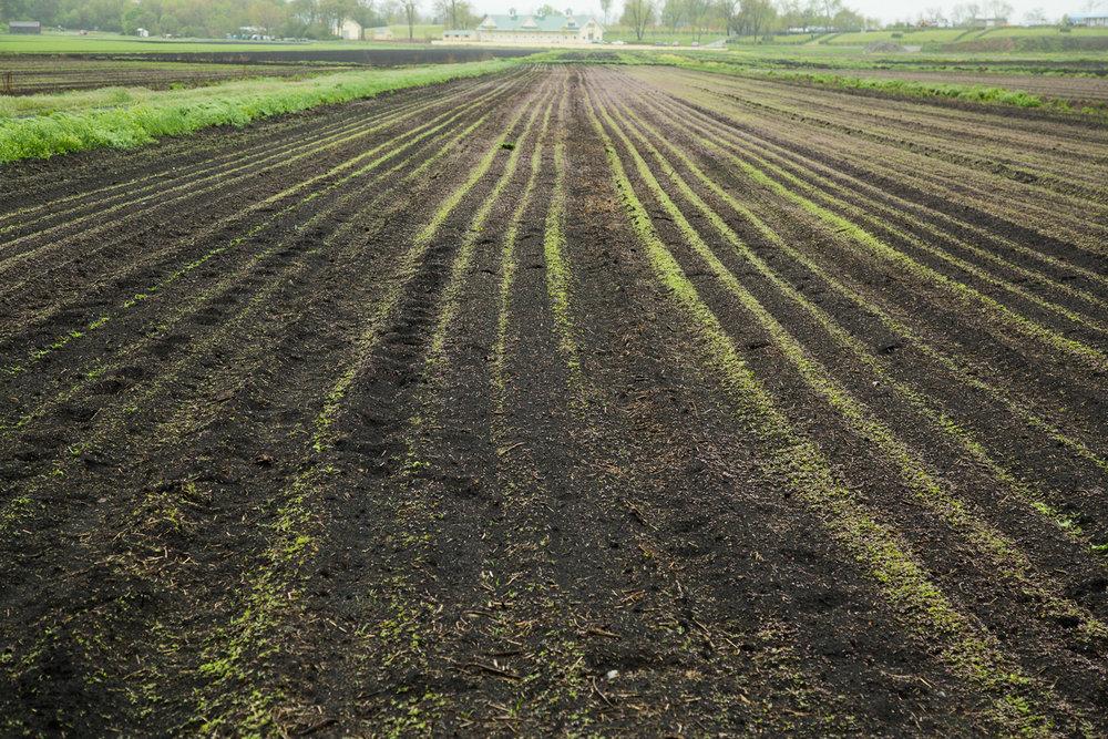 rogowski-farm-upstate-ny-06.jpg