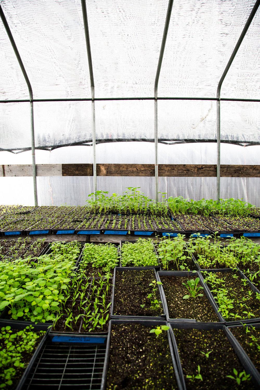 rogowski-farm-upstate-ny-09.jpg