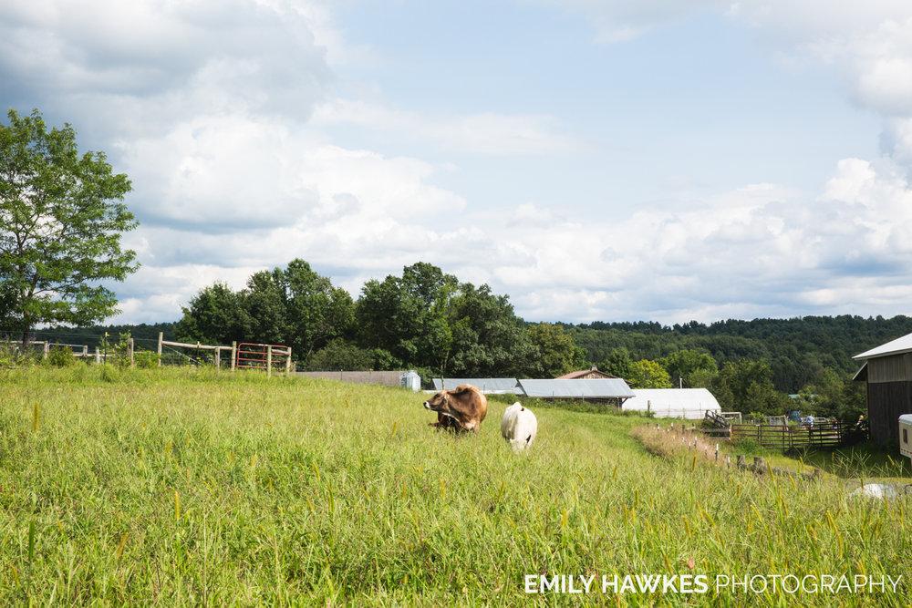 upstate-ny-roxbury-farm-040.jpg
