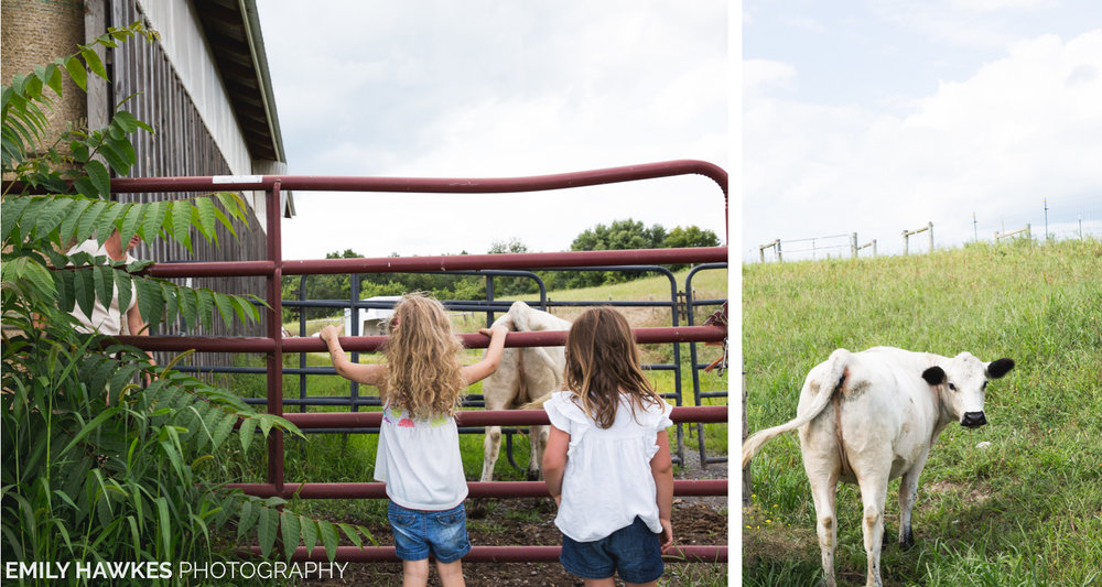 upstate-ny-roxbury-farm-037.jpg