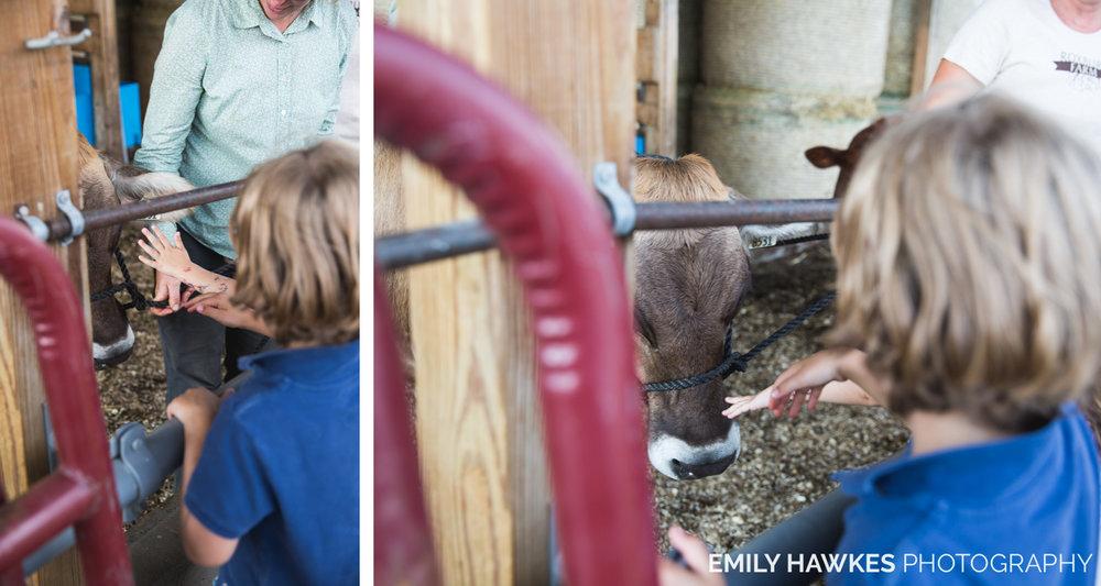 upstate-ny-roxbury-farm-035.jpg