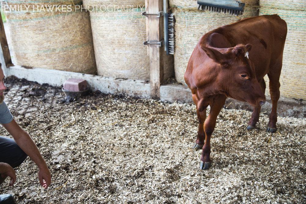 upstate-ny-roxbury-farm-036.jpg
