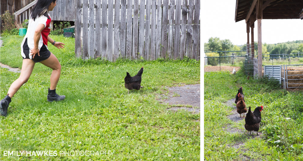 upstate-ny-roxbury-farm-032.jpg