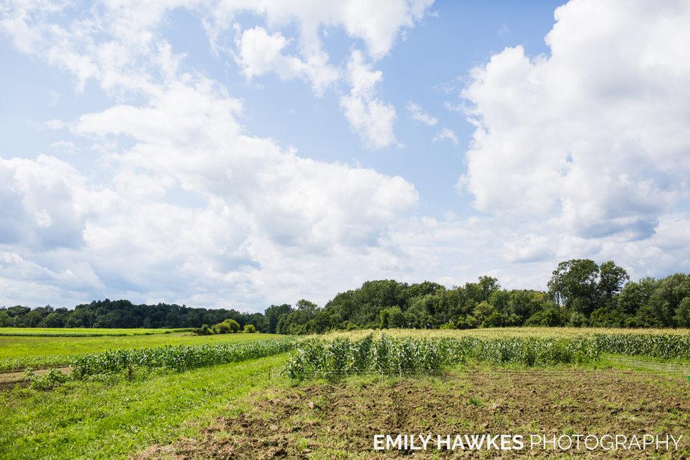 upstate-ny-roxbury-farm-022.jpg