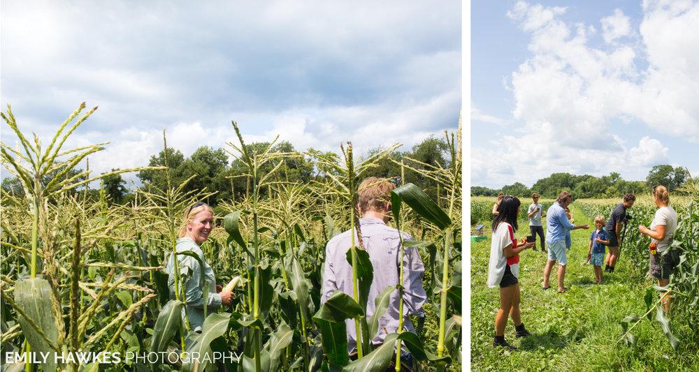 upstate-ny-roxbury-farm-017.jpg
