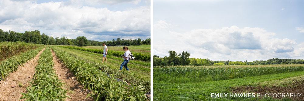 upstate-ny-roxbury-farm-016.jpg