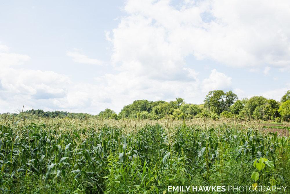 upstate-ny-roxbury-farm-015.jpg