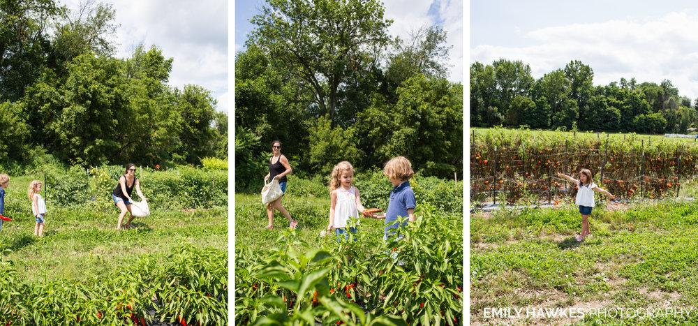 upstate-ny-roxbury-farm-014.jpg