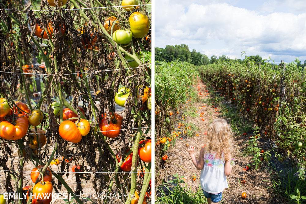 upstate-ny-roxbury-farm-011.jpg