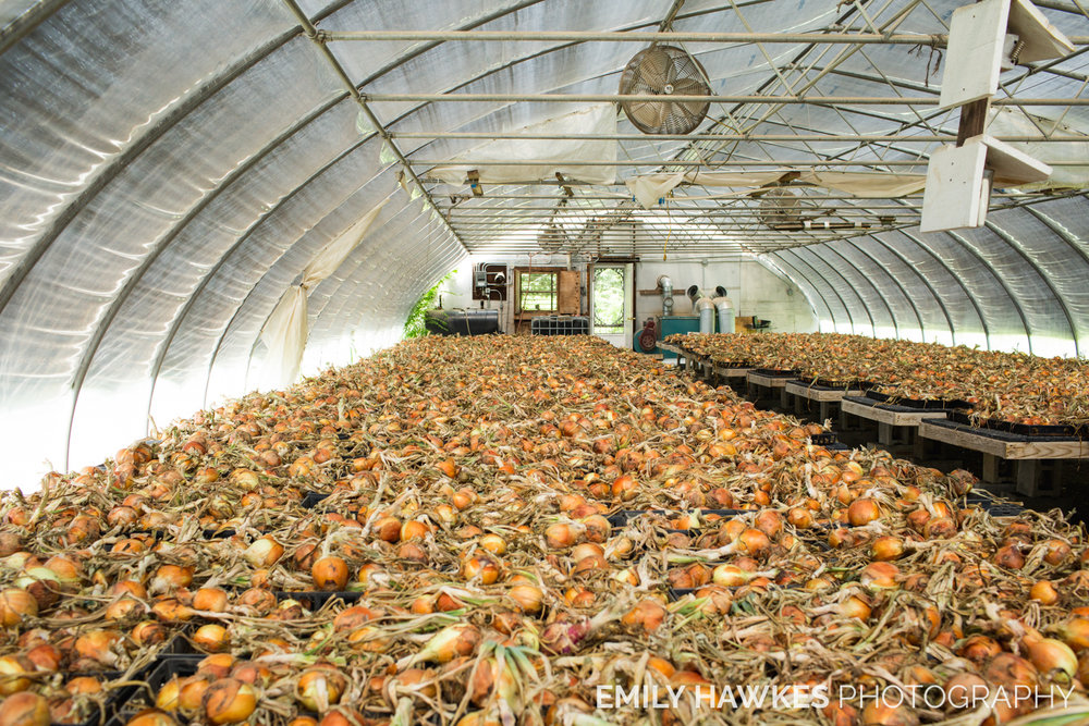 upstate-ny-roxbury-farm-006.jpg