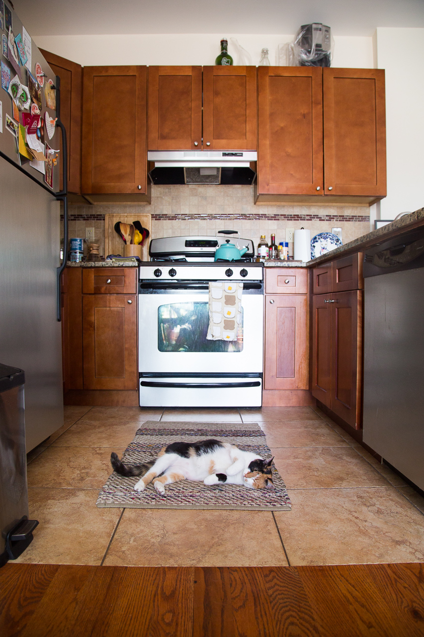 Butters loves the kitchen, but cats don't know anything about interior design.