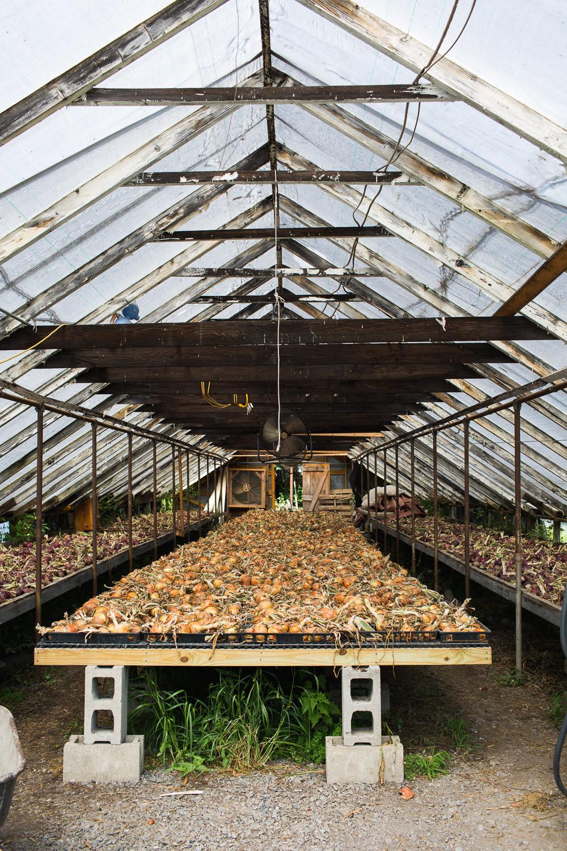 Roxbury-Farm-onion-shed.jpg