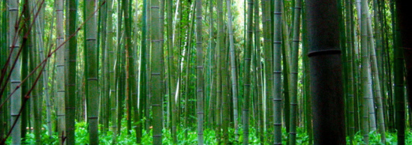 Bamboo 1.png