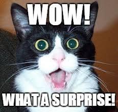 cat surprise.jpg