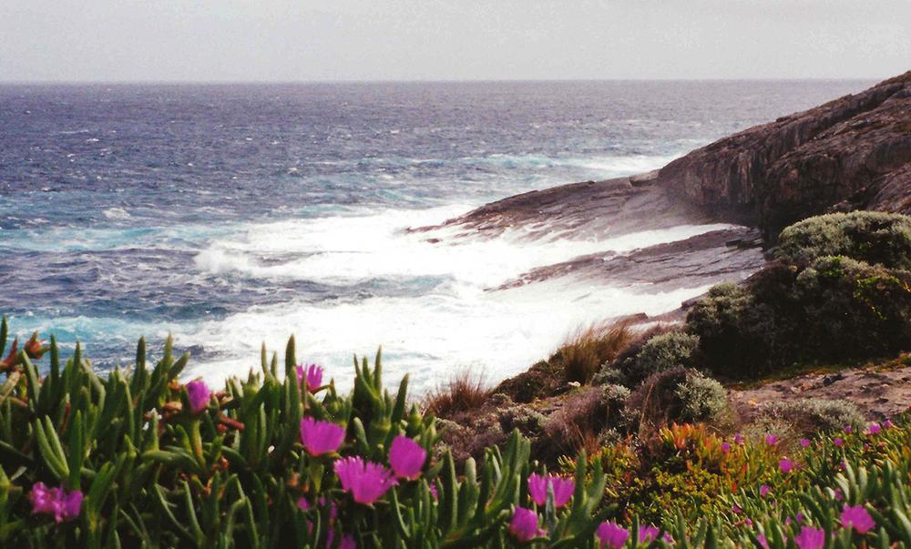 kangaroo island.jpg