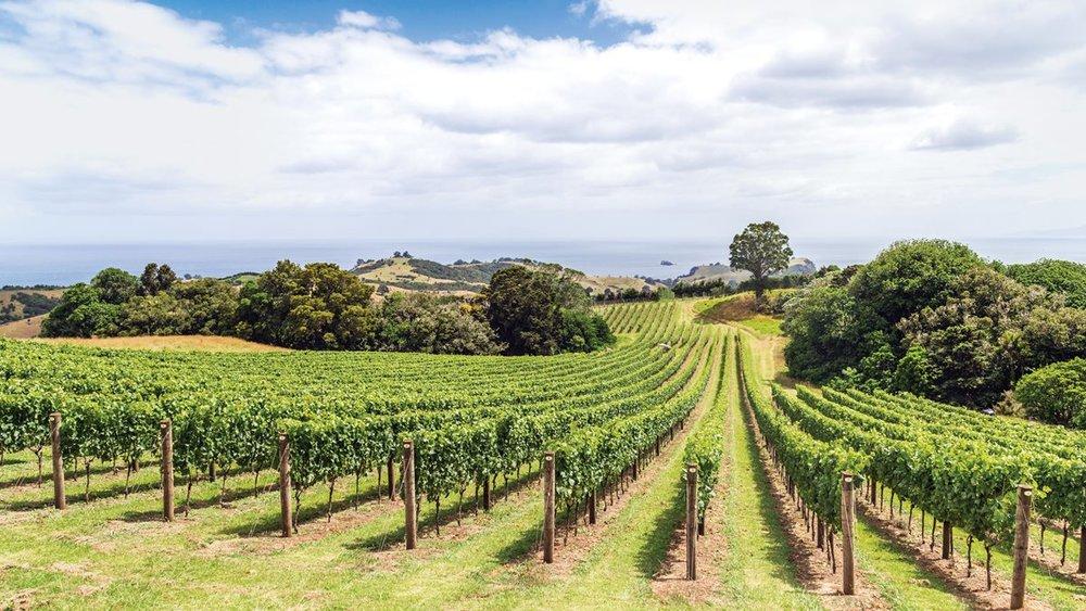 Vineyards on New Zealand's Waiheke Island. Photo by ANASTASIARAS/GETTY IMAGES