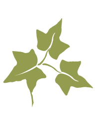 The primary symbol of Alpha Phi is the Ivy Leaf.