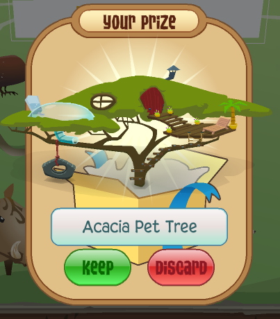 Your prize, the Acacia Pet Tree!