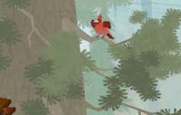 Cardinal (hides) - top left