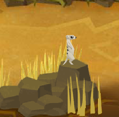 Meerkat (hides)