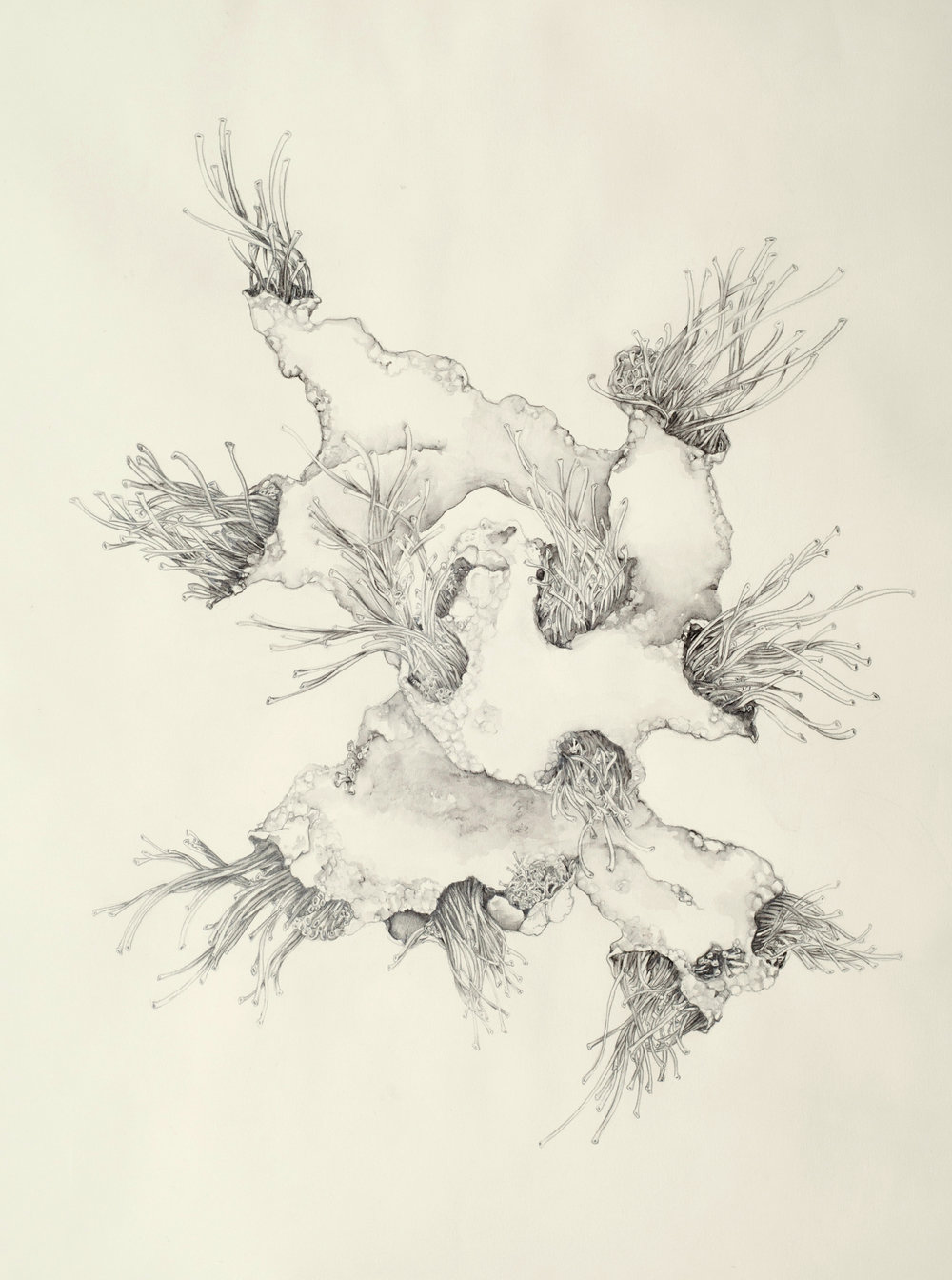 "430x   Moss    water-solu  ble graphite pencil on paper, 22"" x 30""    2014"