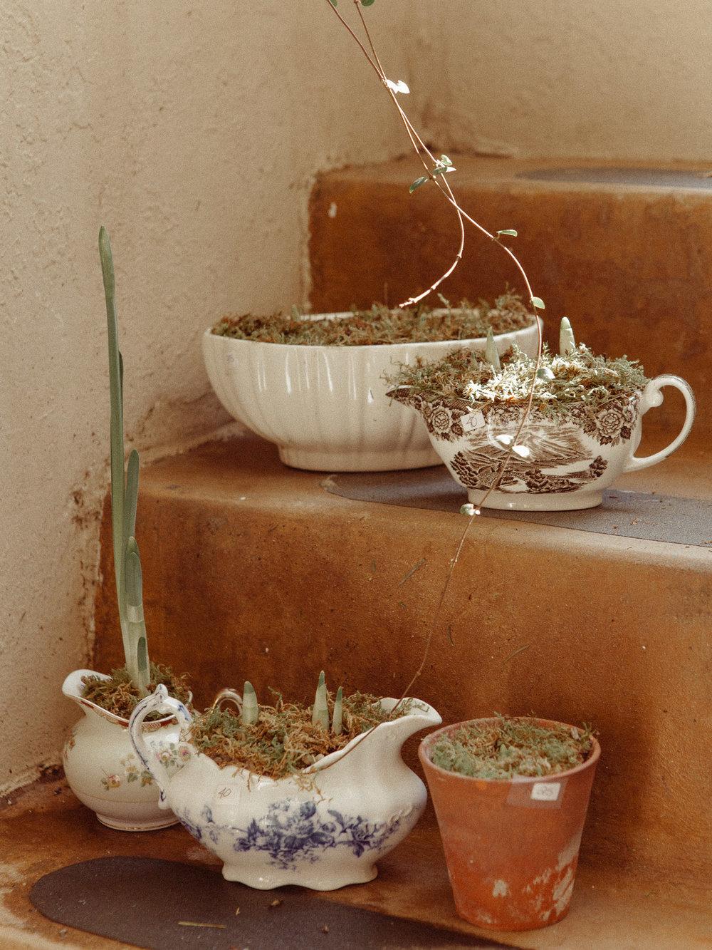 Antique planted 'Paper Whites'. $20-$45 -