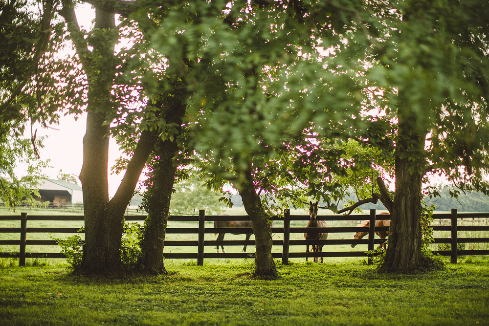 Seriously_Sabrina_Photographer_Lexington_Kentucky_Farm_Engagement_CB8.jpg