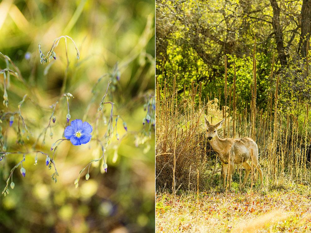 Seriously_Sabrina_Photography_Denver_Morrison_Colorado_Destination_Willow_Ridge_Manor_AR5.jpg
