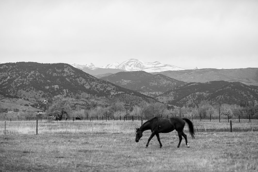 Seriously_Sabrina_Photography_Denver_Morrison_Colorado_Destination_Willow_Ridge_Manor_AR7.jpg