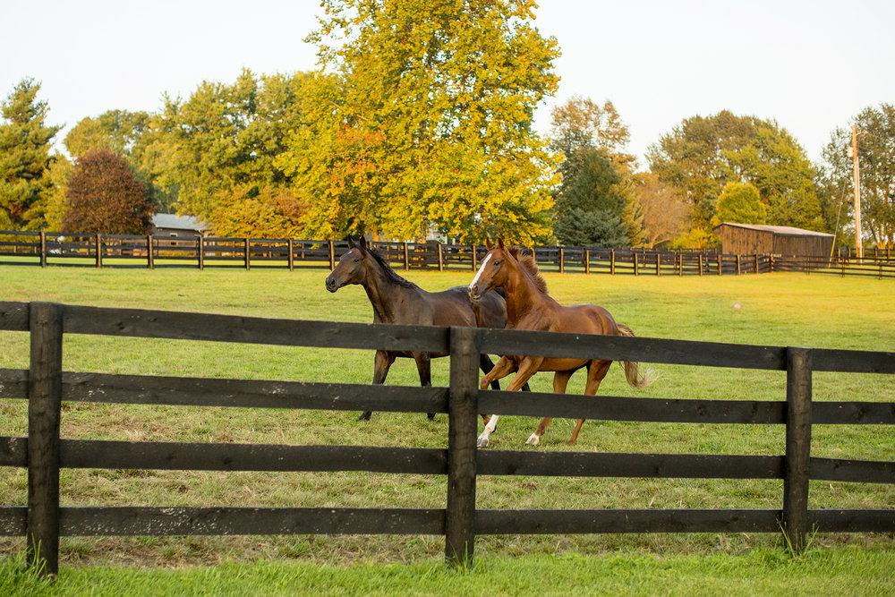 Seriously_Sabrina_Photography_Lexington_Kentucky_Family_Photographer_Seven_Acre_Farm_JimmieKristyn13.jpg