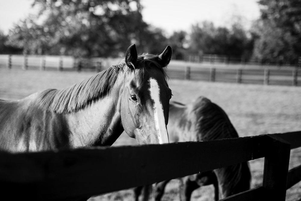 Seriously_Sabrina_Photography_Lexington_Kentucky_Family_Photographer_Seven_Acre_Farm_JimmieKristyn15.jpg