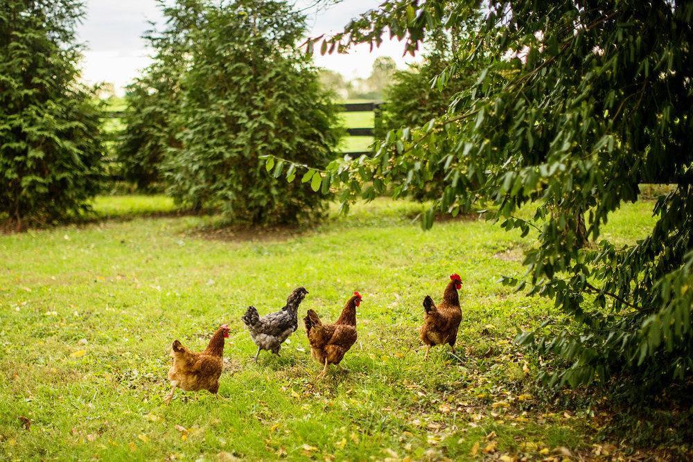 Seriously_Sabrina_Photography_Lexington_Kentucky_Seven_Acre_Farm_Engagement_JN3.jpg