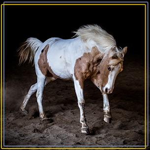 equine studio portraits copy 2.png