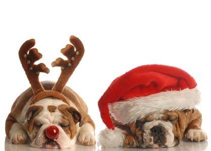 RENNTIER DOGS.jpg